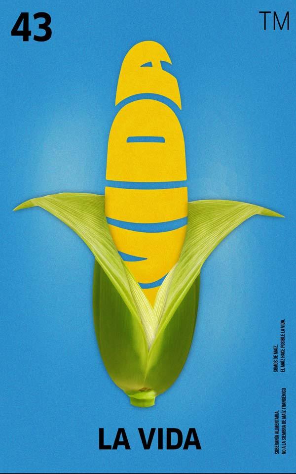 Transgenic maize